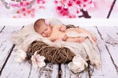 15_engelsgleich-babybilder-babyfotos-babyfotografie-harburg-buchholz-tostedt-4
